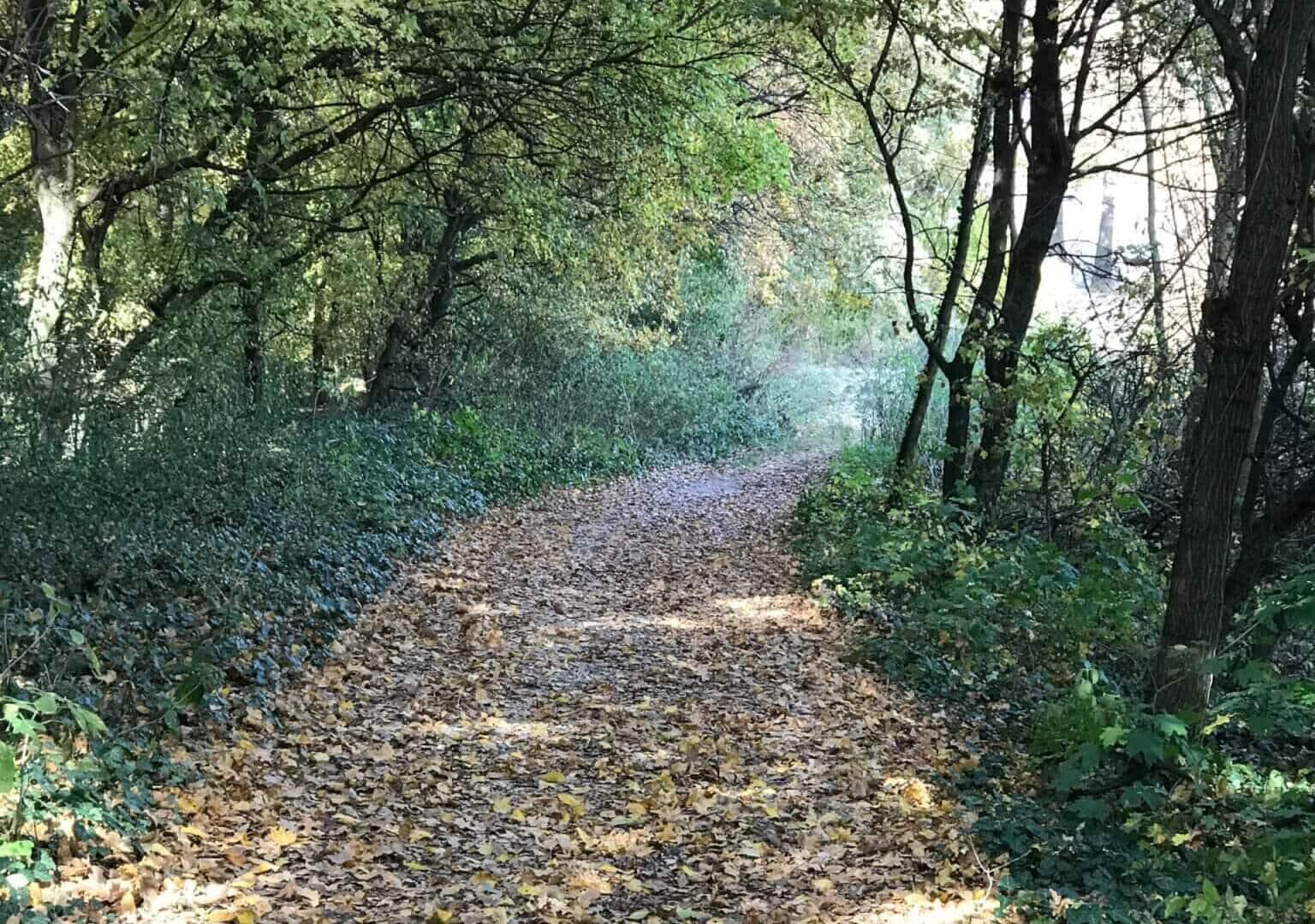 Átölel az erdő – november 7.